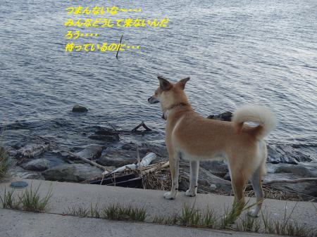 P9215241_convert_20130922085451.jpg