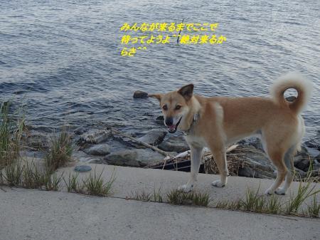 P9215242_convert_20130922085505.jpg