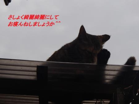 P9255284_convert_20130928095715.jpg