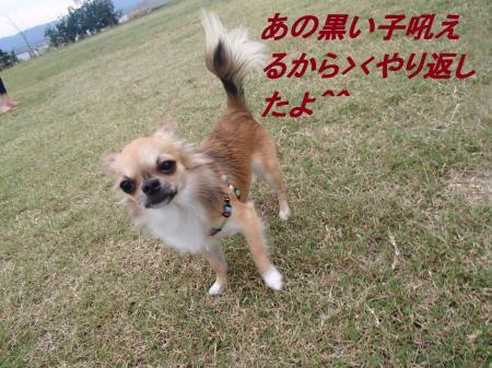 P9295331_convert_20130930094640.jpg