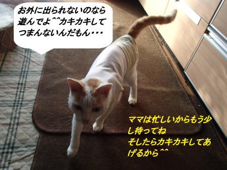 PA015347_convert_20131001092652.jpg