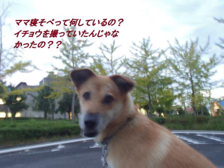 PA025357_convert_20131003045747.jpg