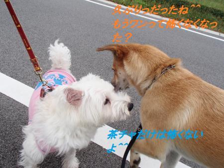 PA075425_convert_20131009081632.jpg