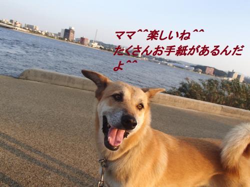 PA115469_convert_20131012093521.jpg