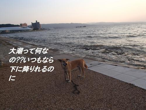 PA115476_convert_20131012093639.jpg