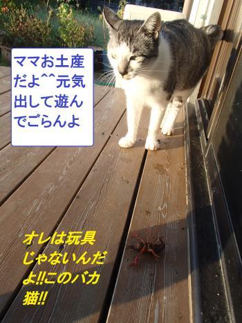 PA135501_convert_20131013095450.jpg