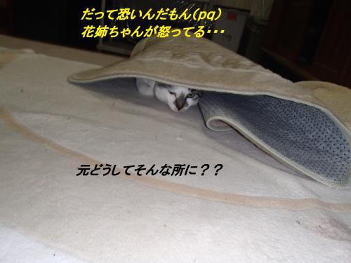 PA255622_convert_20131026073402.jpg