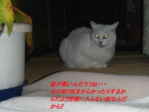 PA255624_convert_20131026073430.jpg