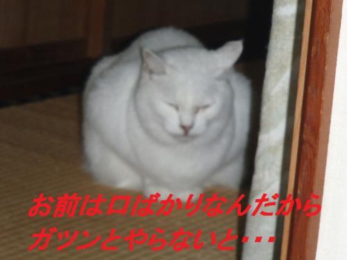 PA255626_convert_20131026073455.jpg