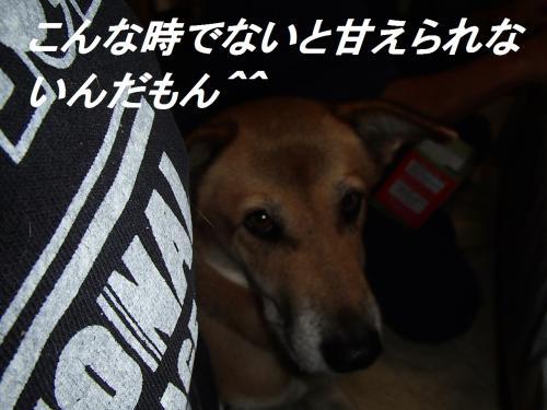PA275638_convert_20131027092341.jpg