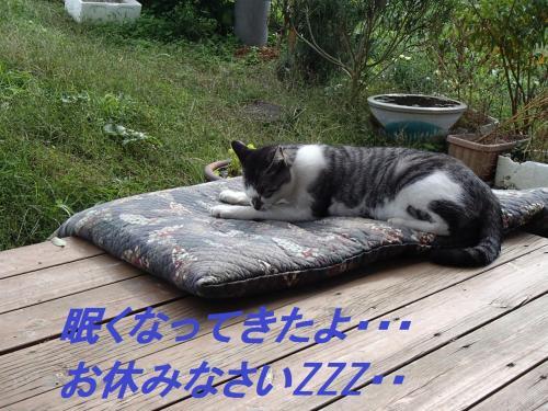 PA275643_convert_20131028054747.jpg