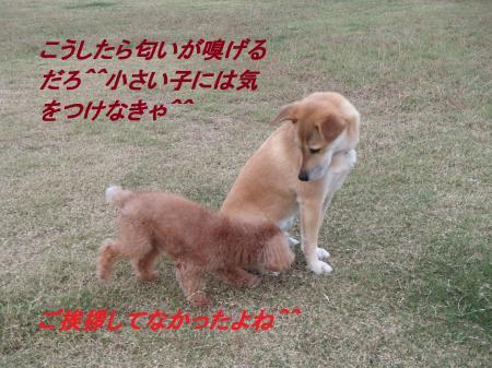 PA285663_convert_20131029070152.jpg