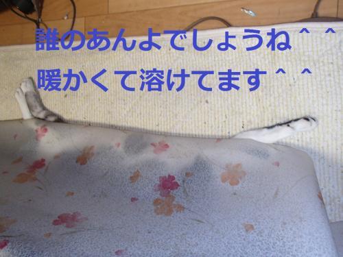 PB015741_convert_20131101082501.jpg