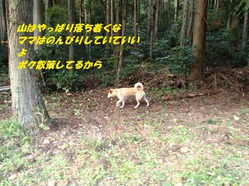 PB075821_convert_20131109093808.jpg