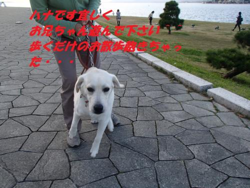 PB085834_convert_20131110101830.jpg