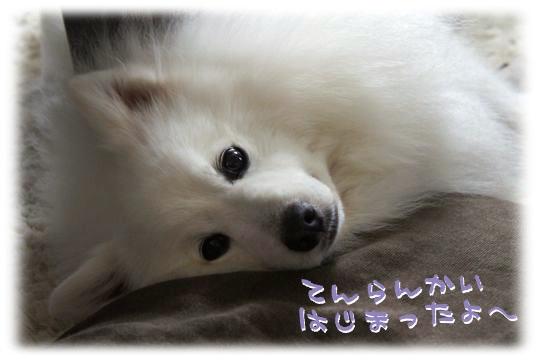 DSC08313_20120617013850.jpg