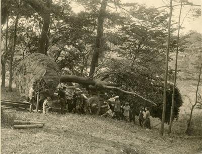 神宮の森の植林-1