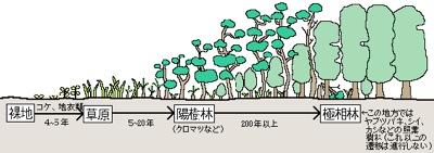 植物遷移の図