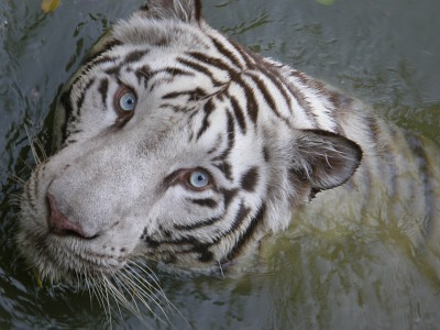 animal_17.jpg