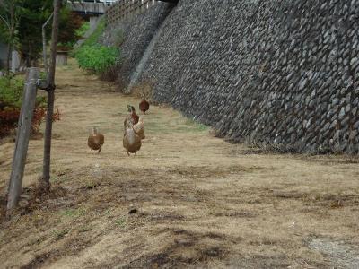2012.08.04 浜田 287