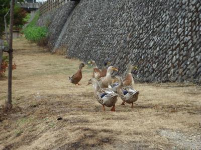 2012.08.04 浜田 291