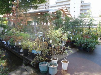 2012.09.27 ガーデン 008