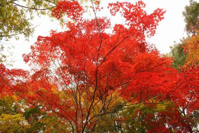 2012.11.03 帝釈峡 362