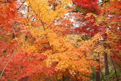 2012.11.10 森林公園 074