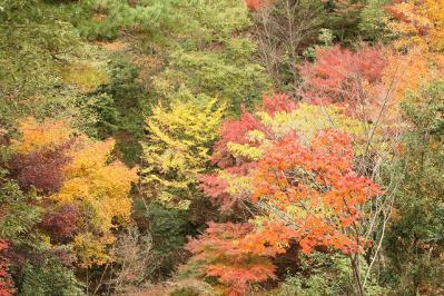 2012.11.10 森林公園 067