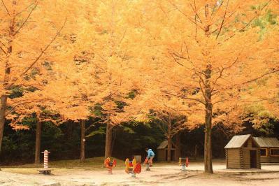 2012.11.10 森林公園 222