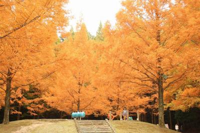 2012.11.10 森林公園 255