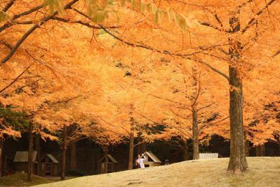 2012.11.10 森林公園 180