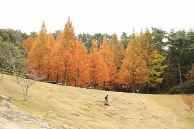 2012.11.10 森林公園 149