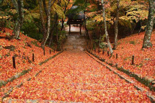 2012.11.17 山口紅葉 030