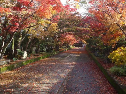 2012.11.17 山口紅葉 112