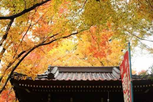 2012.11.17 山口紅葉 089