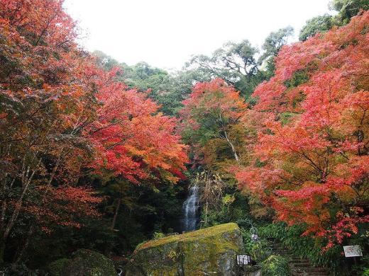 2012.11.17 山口紅葉 065