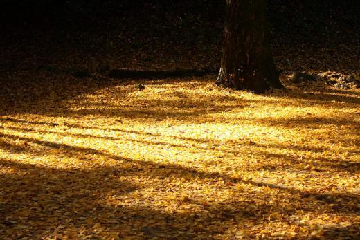2012.11.18 紅葉谷公園 017