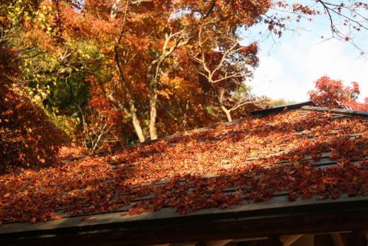 2012.11.18 紅葉谷公園 058