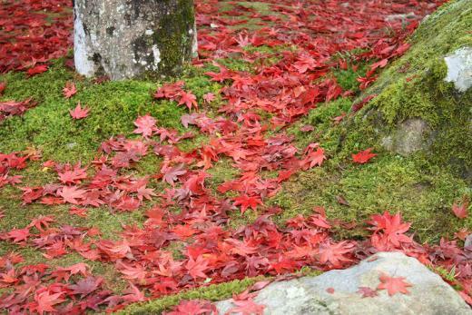 2012.11.18 紅葉谷公園 009