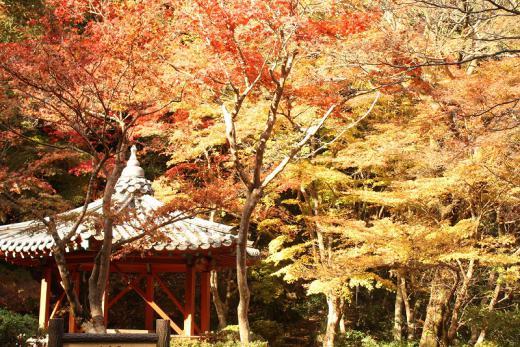 2012.11.18 紅葉谷公園 013