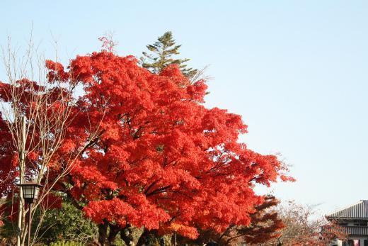 2012.11.18 紅葉谷公園 124