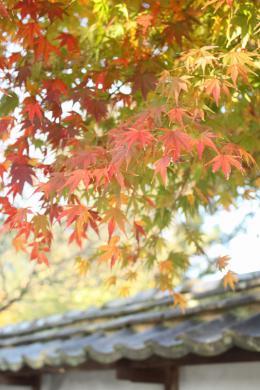 2012.11.18 紅葉谷公園 159