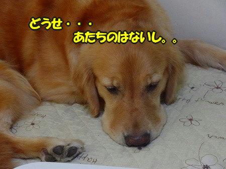 CIMG7146_20110821094103.jpg