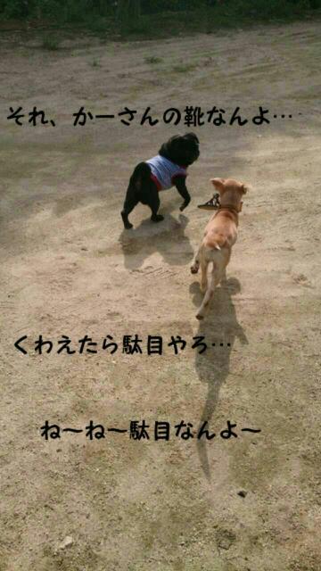 moblog_57ab5b1b.jpg