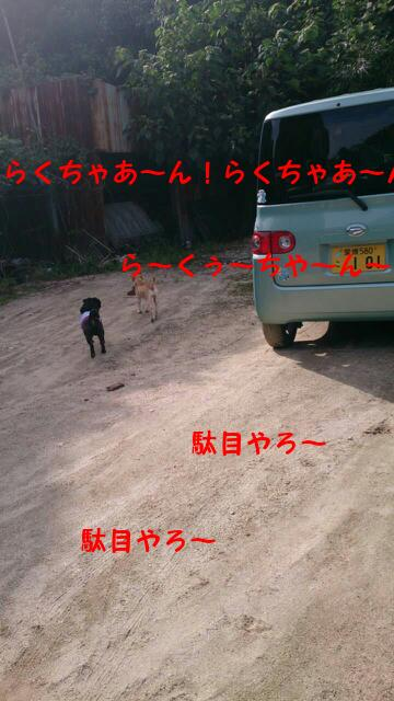 moblog_b6ff1534.jpg