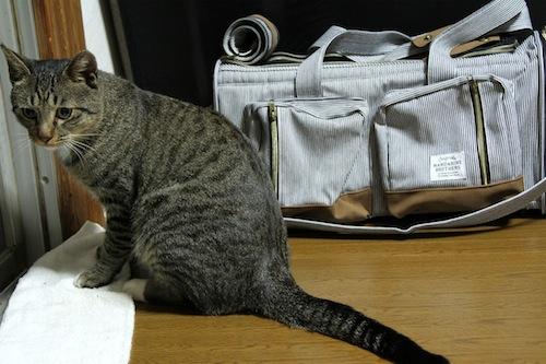 タビちゃんだって猫である