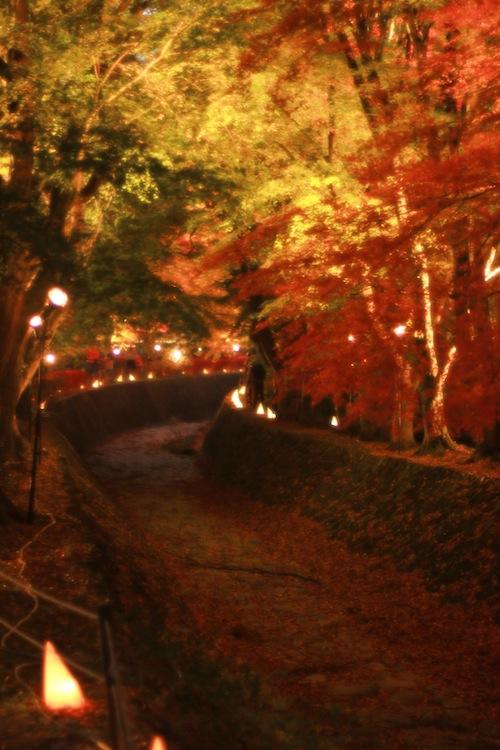 紅葉祭りライトアップ