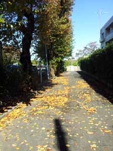 20121118_114447.jpg