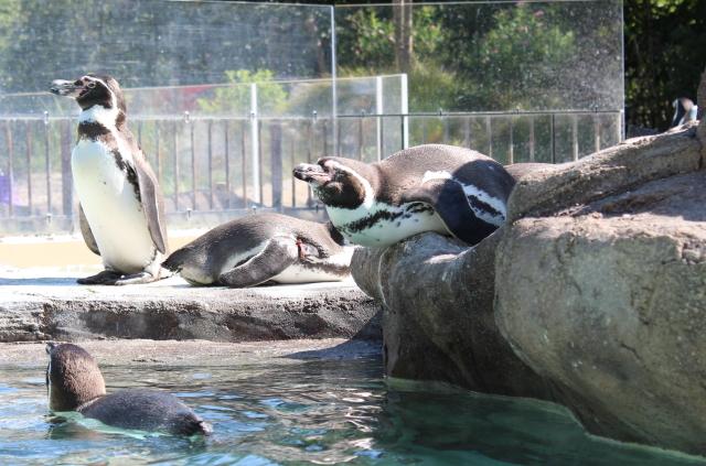 2013.10.113動物園2
